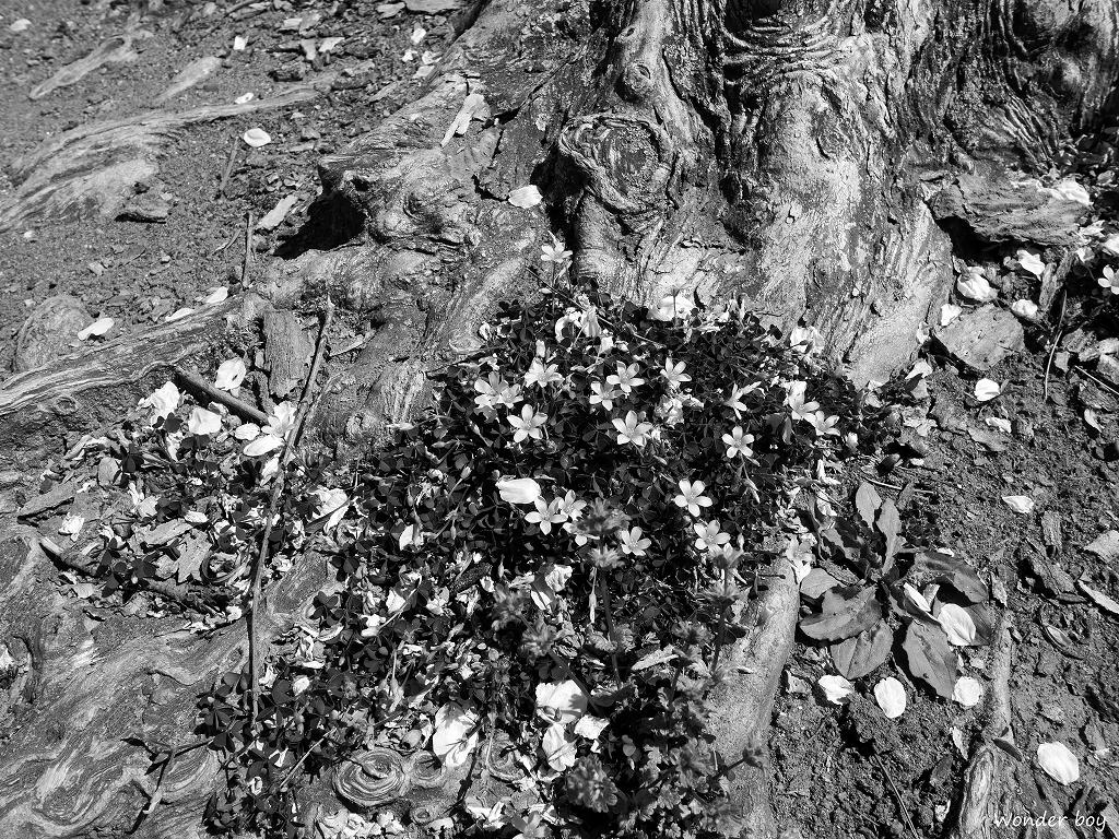 木の根.jpg